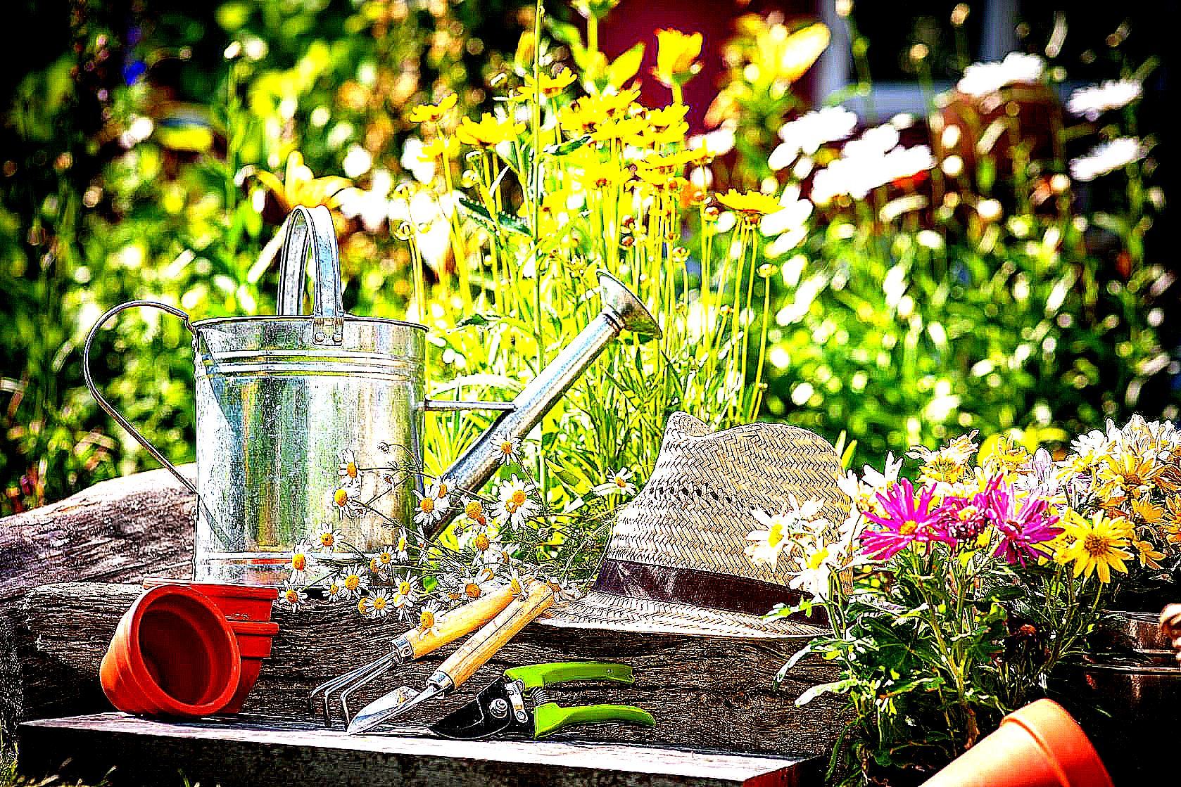 Get a quote mgo handyman garden services for Landscape gardeners